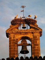 The Crains' Nest & the Bell Tower
