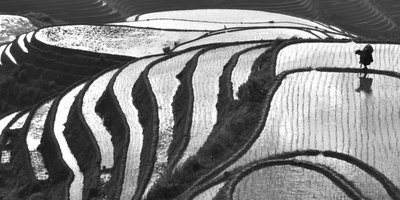 Dragon Backbone's Rice Terraces