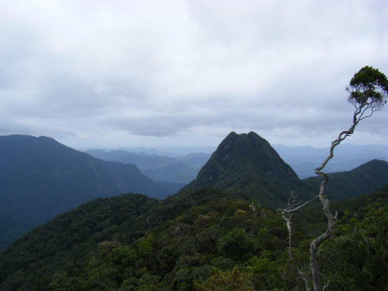 Marojejy views