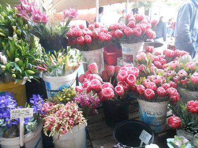 Proteas am Biscuit Mill Market