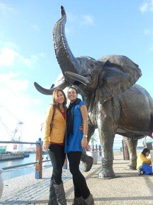 Die Elefanten Damen