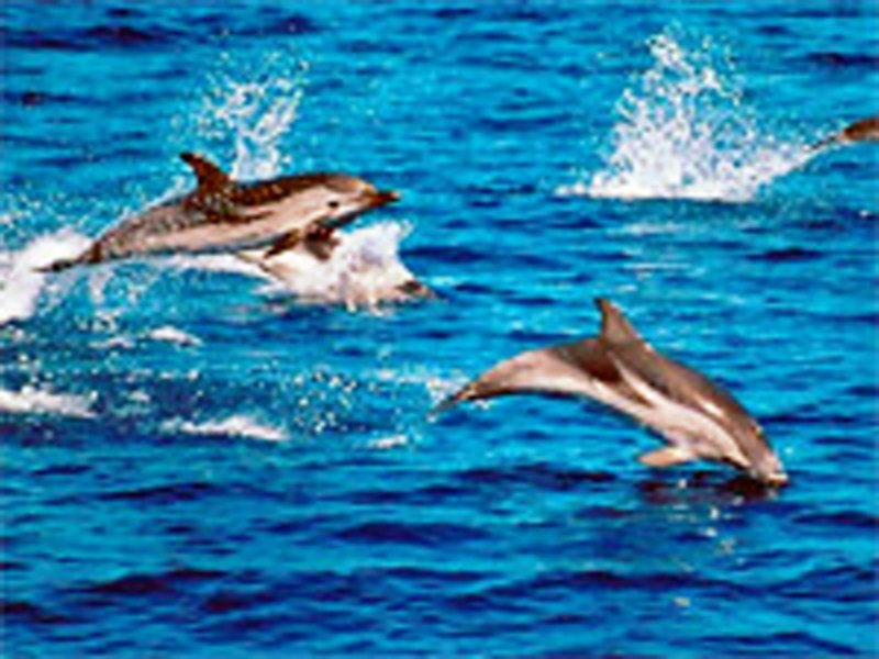 Dolphins in the marine park
