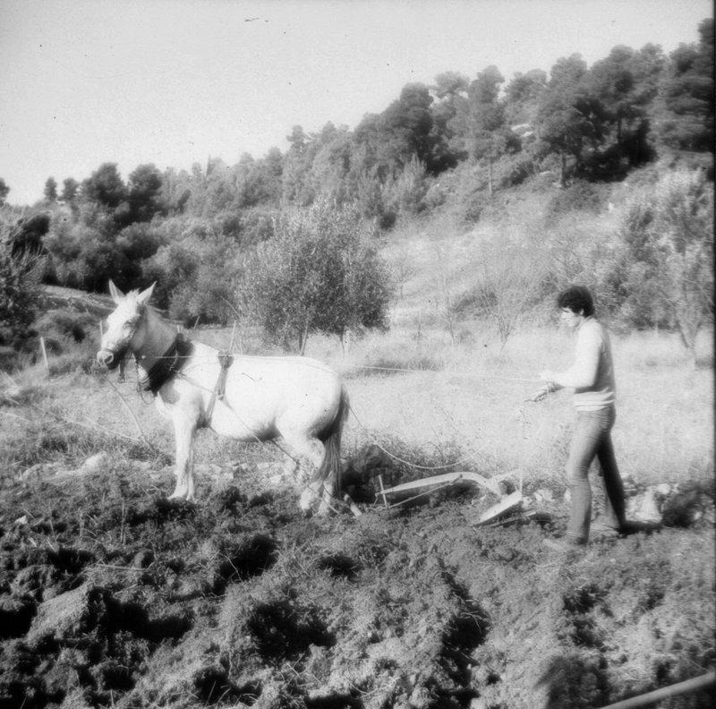 Working on Alonissos Land