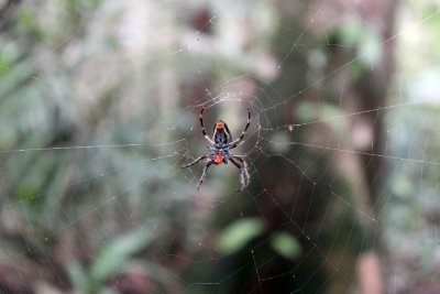 Day Walk in the Amazon - Spider
