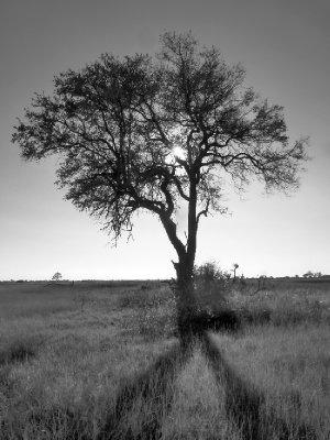 bwtree.jpg