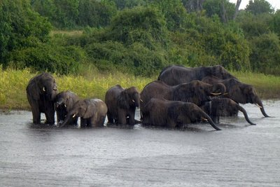 elephantrain.jpg