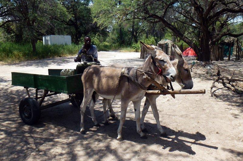Donkeys for beer