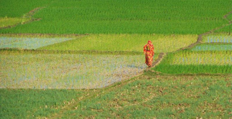 vrouw tussen rijstvelden