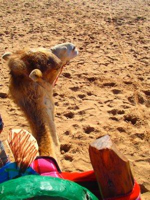 Camel riding!