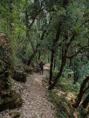 Hiking in Shimla