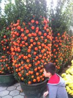 Skyler examining the fruit