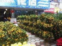 tangerine plants