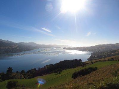 Dunedin 20