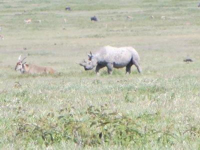 Yeah...the same Black Rhino!