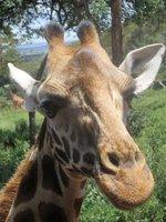 elia_twiga_Nairobi_072.jpg