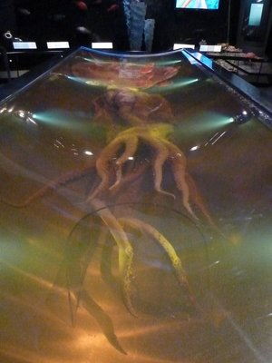 Giant Squid at Te Papa, the largest and most complete specimen ever found