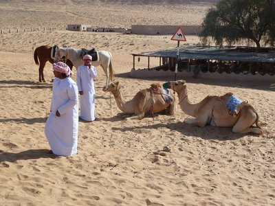 A couple of camels waiting for the tourists