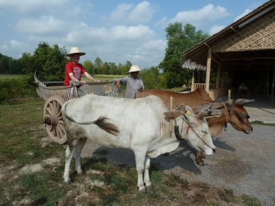 Me on the back of the Ox Cart - in my Thai Farmer's Straw Hat!