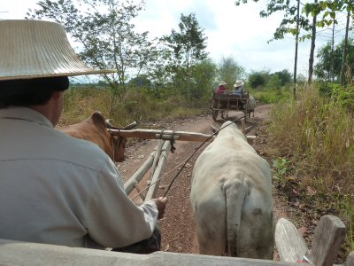 View riding an Ox Cart