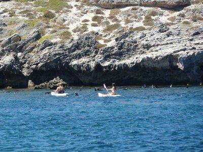 Kayaking and snorkeling amongst the seals on Rottnest Island