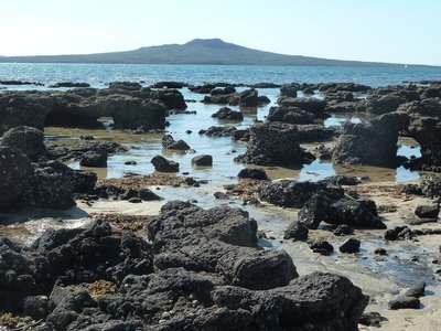 The Fossil Forest exposed on Takupuna Beach in front of Rangitoto, Auckland's largest and youngest volcano
