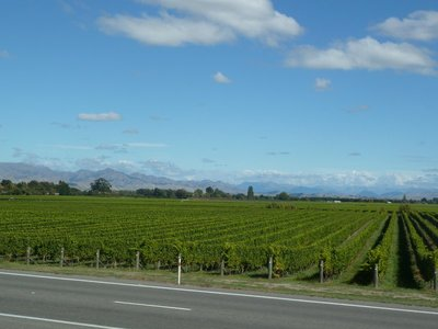 The endless vineyards of Marlborough