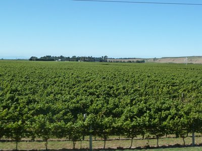 ...and yet more vineyards