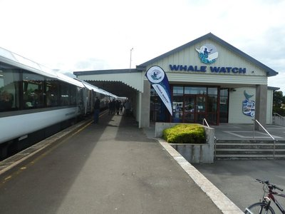 The train stops at Kaikoura famous for whale watching