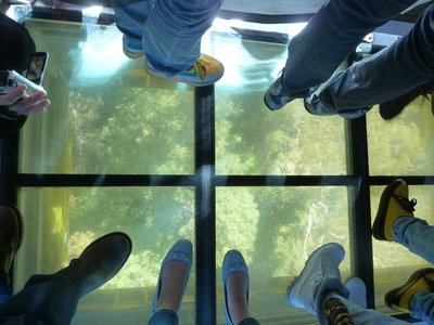 The floor of the Scenic World Skyway defrosts to reveal the Rain Forest beneath us
