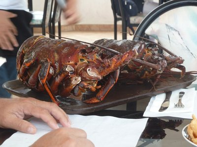 Lobster ready for the pot in Puerto Nuevo