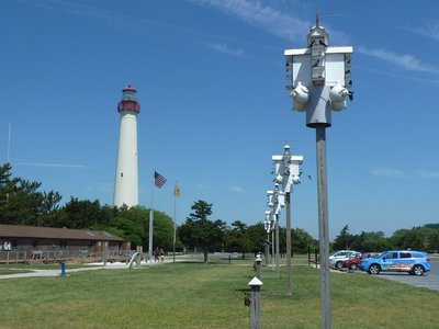 Purple Martin nesting boxes at Cape May