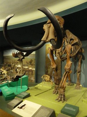 Woolly Mammoth skeleton on display in the Ice Age Hall