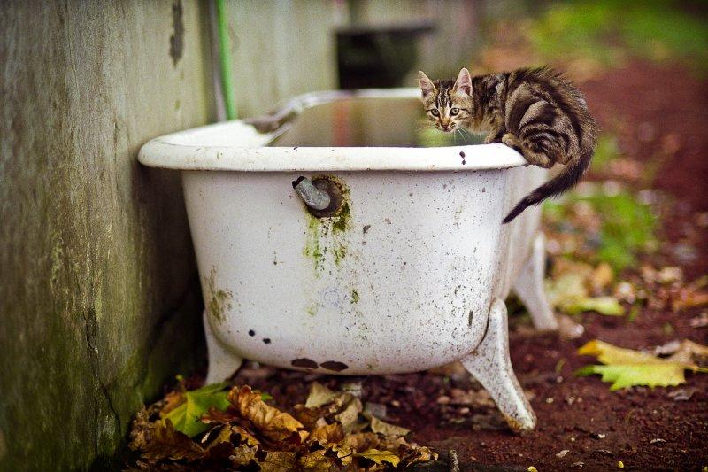 Bathtub Cat
