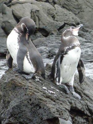 """penguins :-)"""