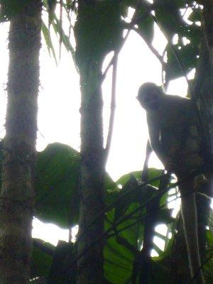 """""""spot the monkey"""""""