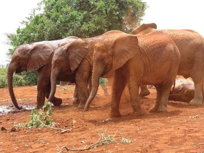 02282012 1 Elephant Orphanage
