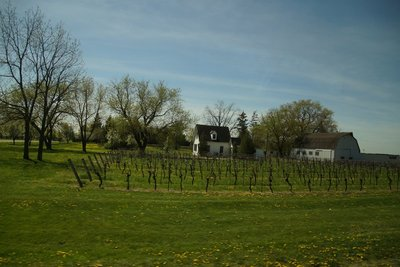 Vineyards along the Niagara Parkway