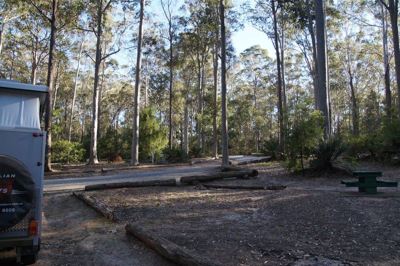 Campground at Bodalla Forest Rest Area
