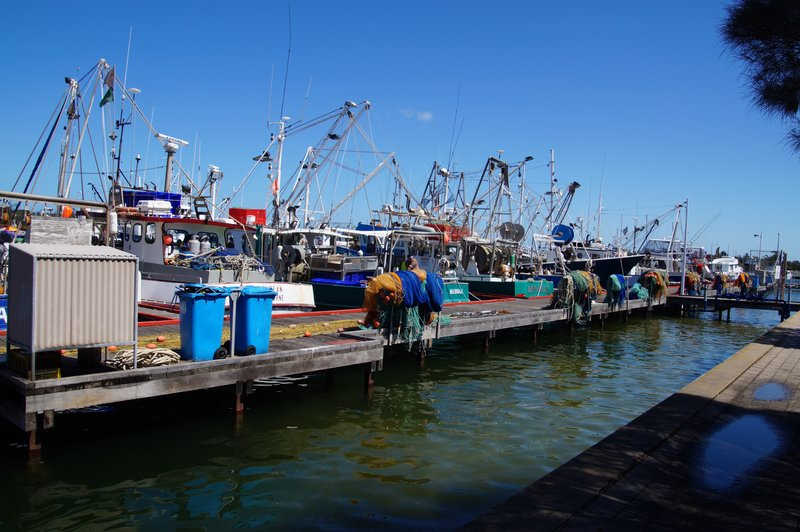 A very small part of the fishing fleet at Lakes Entrance