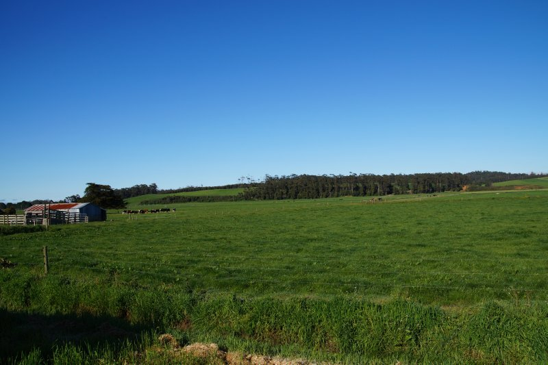 Dairying country west of Smithton