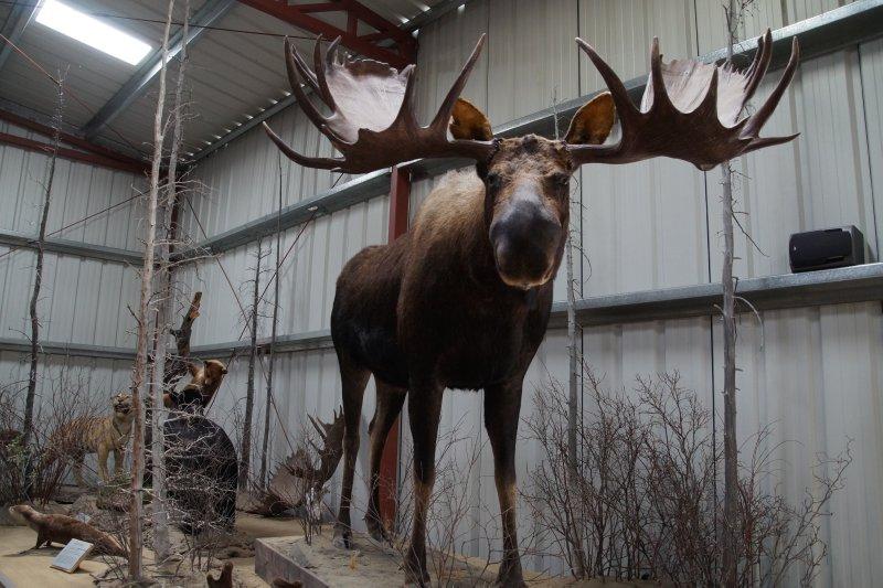Museum at Caribou Crossing