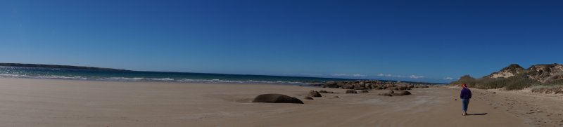 Panorama  on Wednesday - Beach at Village Green, Waterhouse Conservation Area