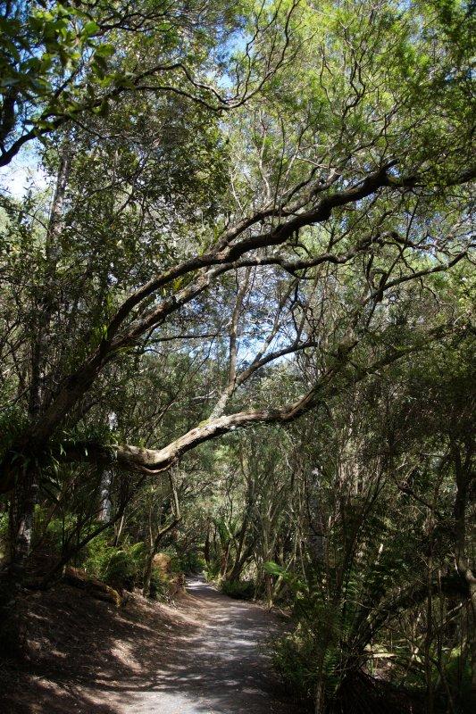 Track to St Columba Falls, Pyengana