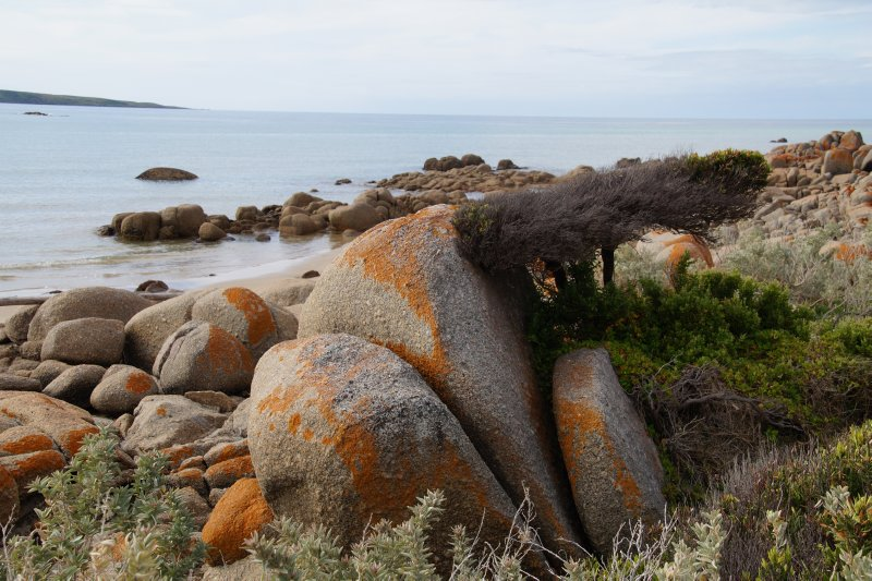 Tree sheltering behind rock at Beach at Village Green, Waterhouse Conservation Area