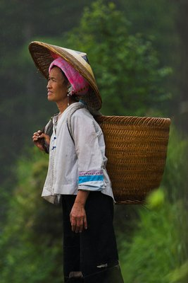Coming from the rice fields