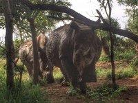 Hlane National Park, Swaziland