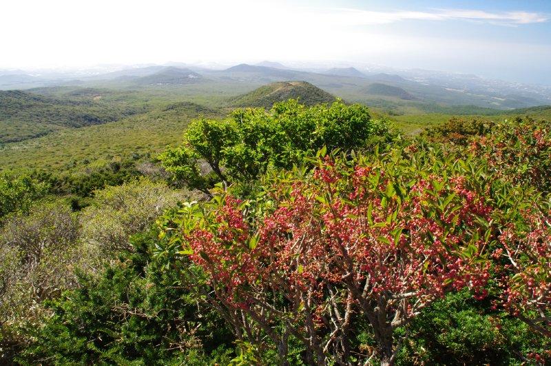 Mont Hallasan