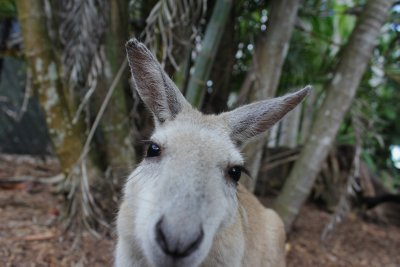 Cairns_Wil..Habitat__8_.jpg