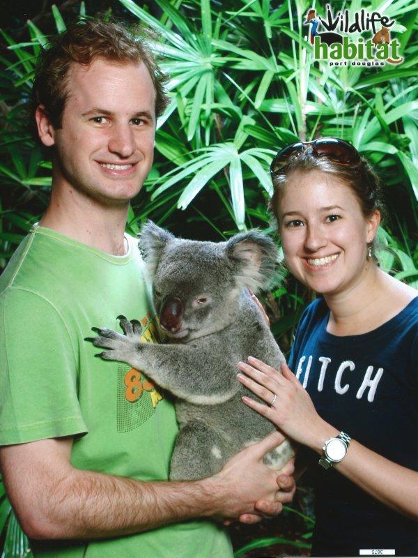 large_Cairns_-_Koala.jpeg