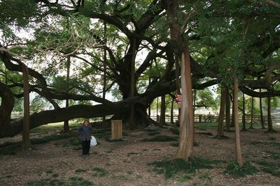 Lady_tree.jpg